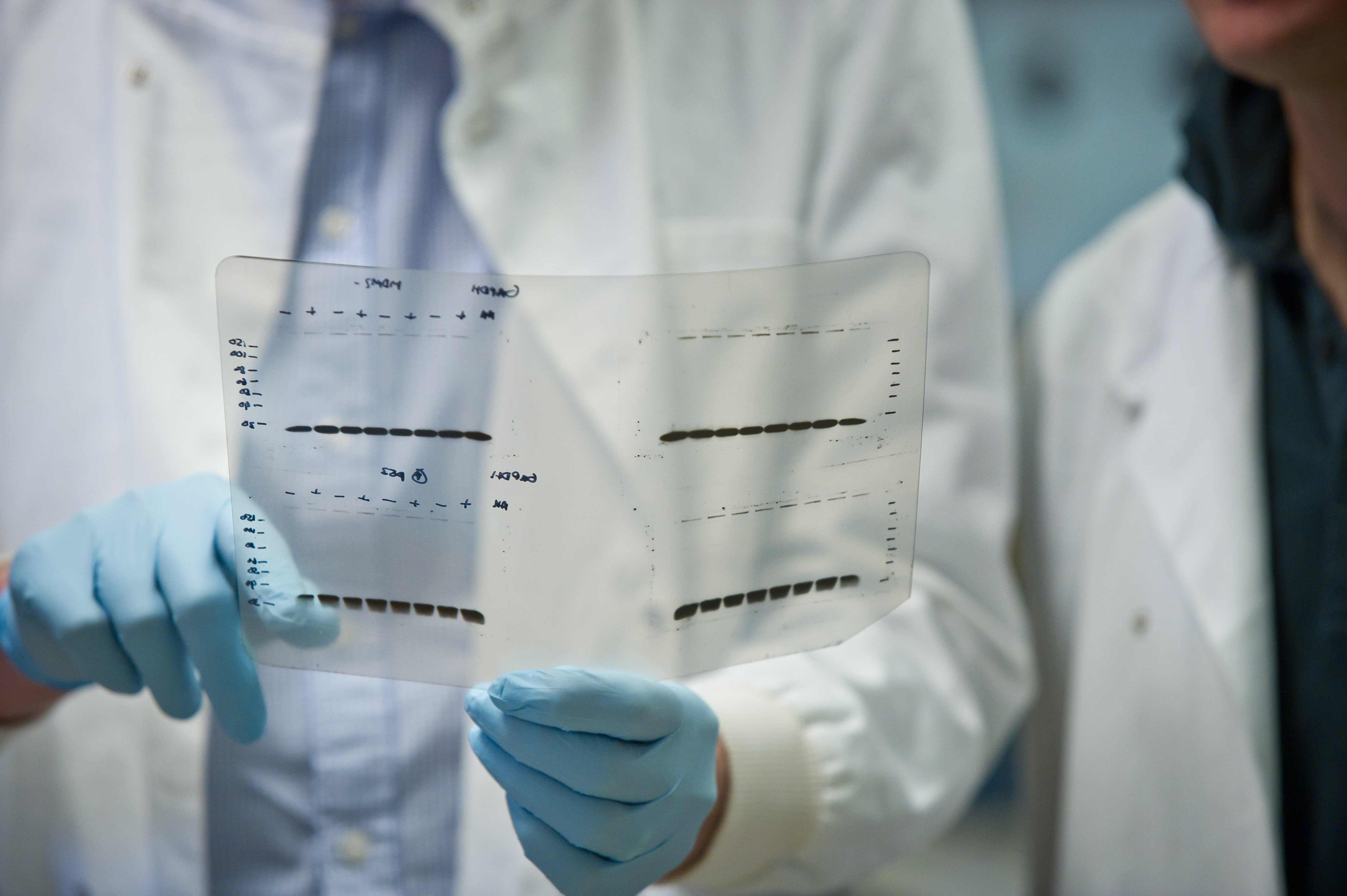 General image - lab research