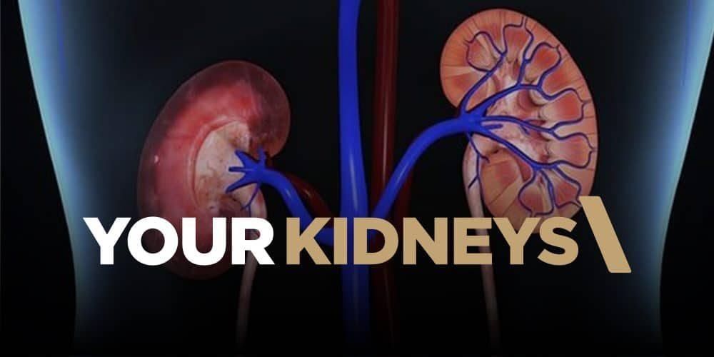 ACF-featured-your-kidneys